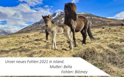 Liebe Grüße aus Island